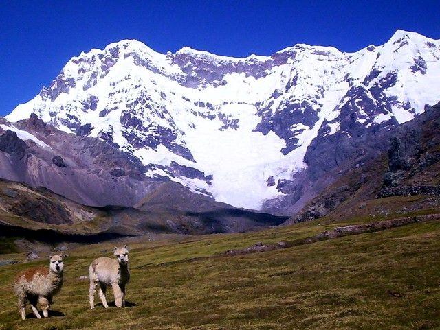 Ausangate Trek Alpaca